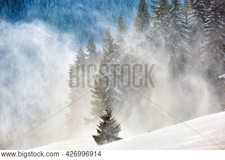 Tall Evergreen Pine Trees During Heavy Snowfall In Winter Mountain Forest On Cold Bright Day.