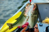 two large bass on one hook closeup poster