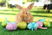 Fluffy foxy rabbit on grass with Easter eggs in park poster