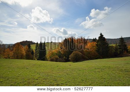 Autumn Forest In Mountain