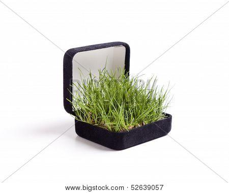 Grass Proposal