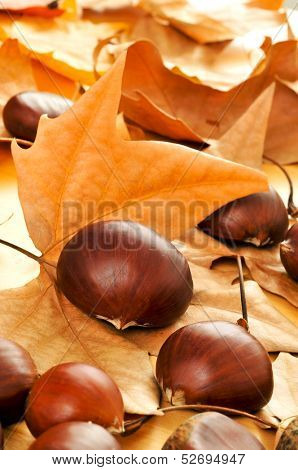 a pile of chestnuts with some autumn leaves on the background