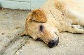 dirty homeless dog sadness lost of home poster