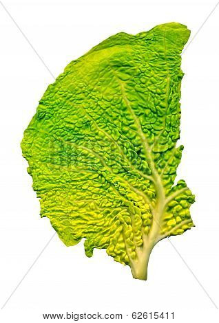 Cabbage leaf structure