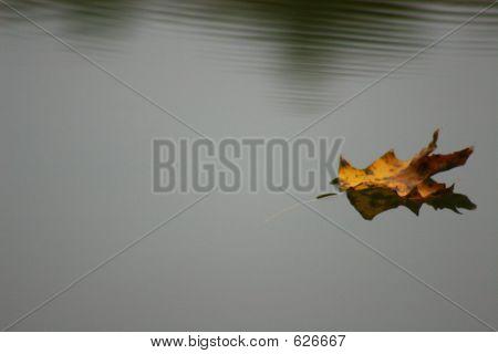 floatingleaf
