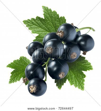 Black Currant 4 With Leaf Isolated On White Background