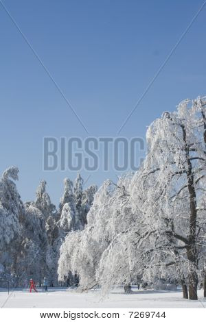 Icy trees and skiers