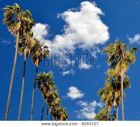 Palms Of Pasadena From 339