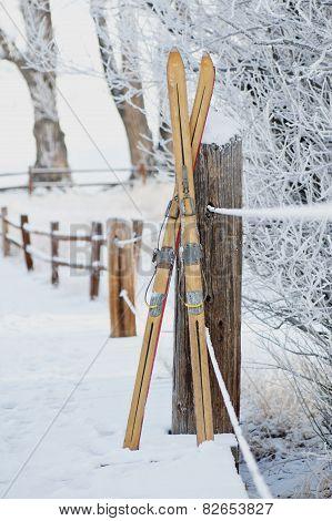 Vintage Skis in Snow Scene