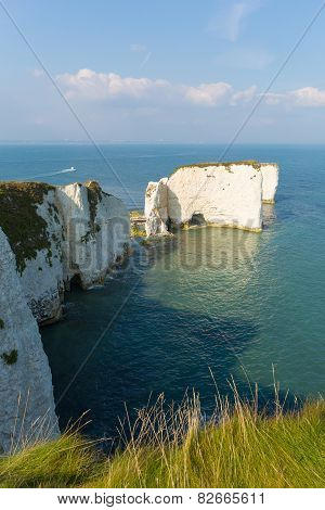 Chalk cliffs Old Harry Rocks Isle of Purbeck in Dorset south England UK