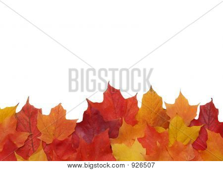Fall Leaf Border