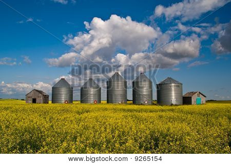 A Row Of Grain Bins In A Field Of Yellow Canola Flowers