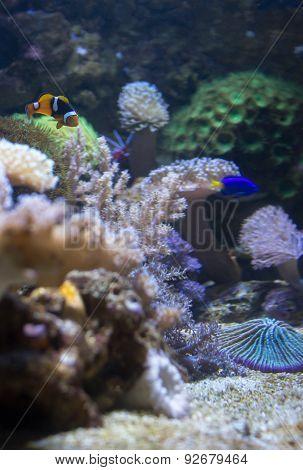 Sea Life Aquarium In Munich, Germany, 2015
