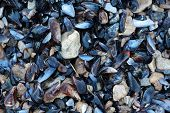 texture from mussel on beach see product poster