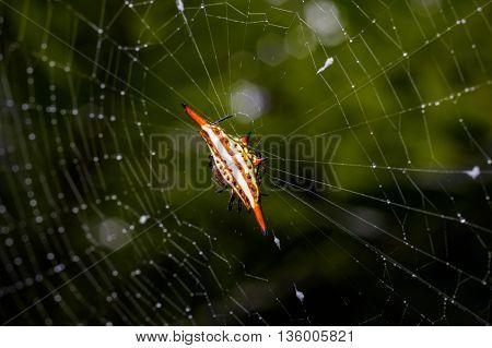 Spider in Da Lat rain forest  - Bidoup nui ba national park