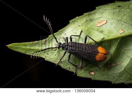 Insect, bug in Da Lat rain forest  - Bidoup nui ba national park
