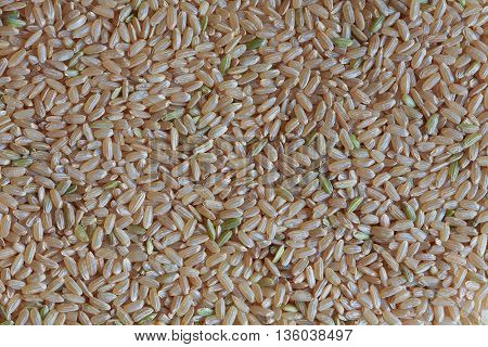 wild rice, white rice, rice macro photo, raw rice, unpolished rice, dry rice, rice background, rice pattern, asian rice
