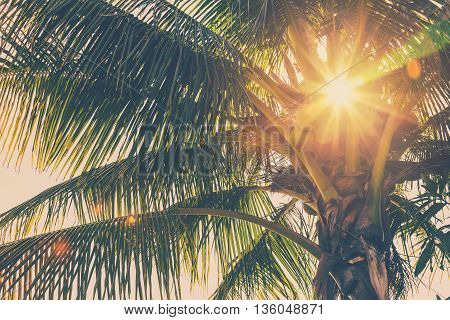 Coconut Palm Tree And Sunlight In Summer With Vintage Toned.