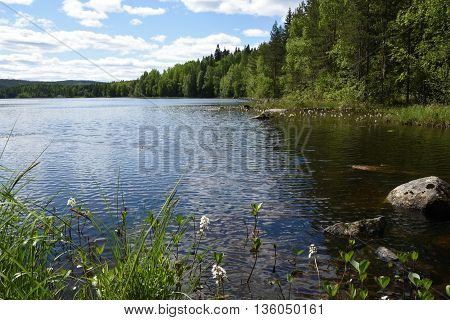 Little lake with some flowers in the foreground picture from the North of Sweden.