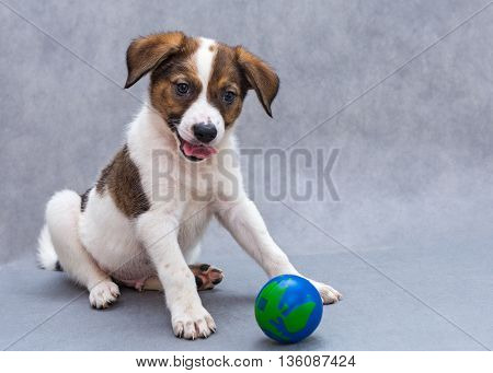 Little spotted puppy dog with blue ball