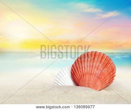 Big seashell on the sandy beach. Summer time.