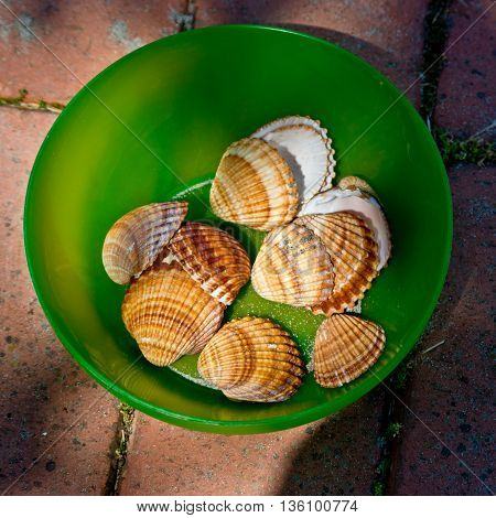 sea shells collected from a child to play and collected in a green bowl