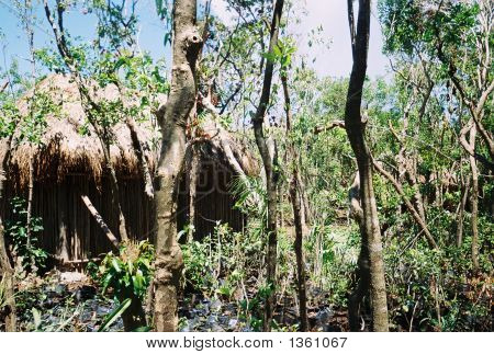 Jungle Hut