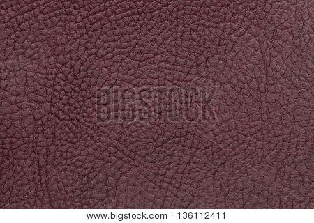 Dark burgundy leather texture background. Closeup photo. Reptile skin. The skin of a crocodile or a snake