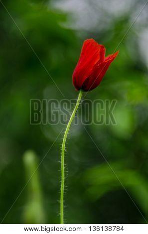 Cute flower Amazing flower.