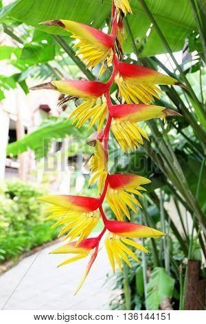 Bird of paradise,  Beautiful flower in thailand