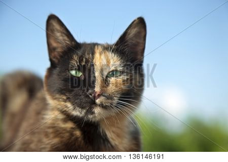 cat kitten with unusual color half faces on nature on a background of summer greens