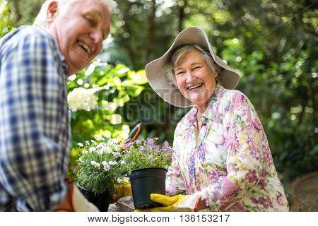 Happy senior couple with flower pots in garden