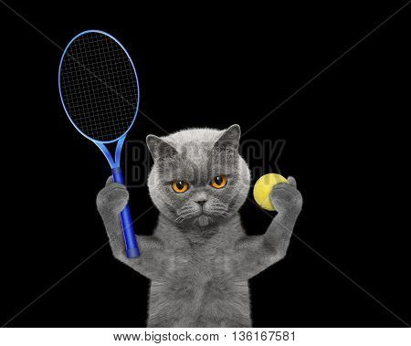 Cat is going to play tennis -- isolated on black