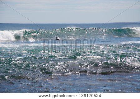 KALBARRI,WA,AUSTRALIA-APRIL 23,2016: Surfer paddling out to the Indian Ocean swell at Blue Holes Beach in Kalbarri, Western Australia.