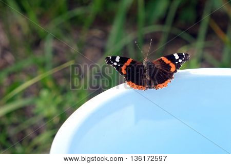 Vanessa atalanta. Butterfly admiral is sitting on the edge of a blue bucket on a background of green grass on summer day closeup