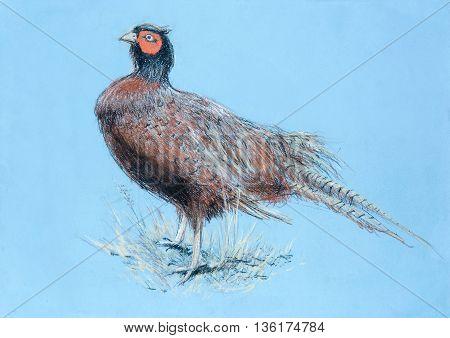 Pheasant hand drawing pastel. Authentic original painting