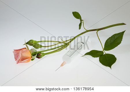 Euthanasia - A rose on a stem next to a syringe on a white background