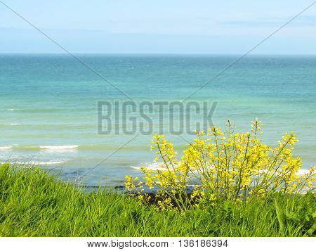 Wild flowers on the seacoast and ocean as background