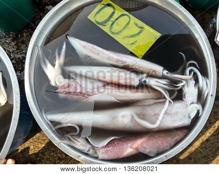 Squids raw fresh seafood in market Thailand