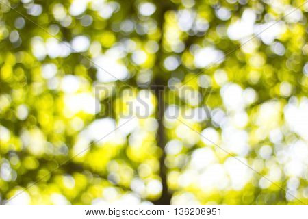 Background Bokeh from the sun under the shade of trees.