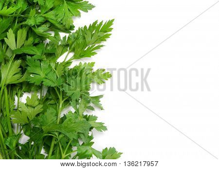Parsley on white background