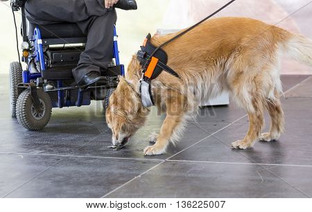 Guide And Assistance Dog Keys