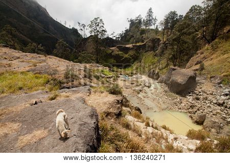 Hot springs with yellow water near Mount Rinjani volcano, Lombok, Indonesia.