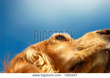 Dog Eye In The Sky