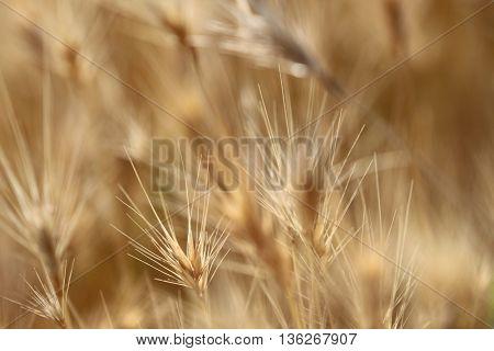 Close-up high dry grass