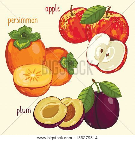 Set of fruits mix vector isolated. Healthy eat. Apple, persimmon and plum fruits. Natural organic food. Ingredients for fruits salad. Sweet and ripe summer fruits. Isolated apple, persimmon, plum fruits.