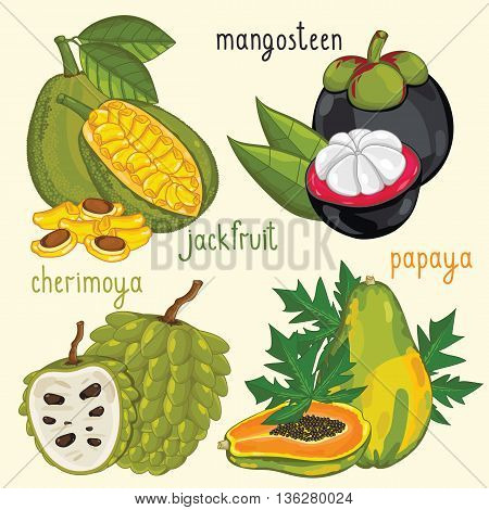 Set of fruits mix vector isolated. Mangosteen, jackfruit, cherimoya and papaya fruits. Natural organic food. Ingredients for fruits salad. Sweet and ripe summer fruits. Isolated jackfruit, cherimoya, papaya fruits.