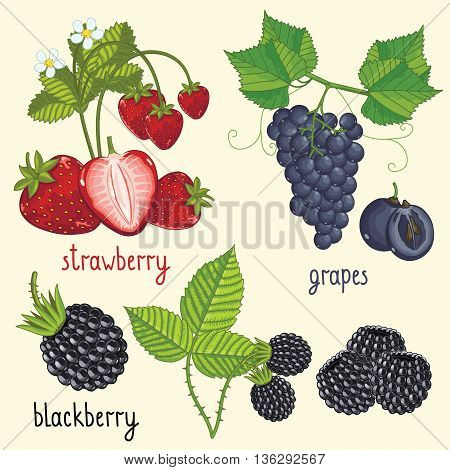 Set of berries mix vector isolated. Healthy eat. Strawberry, grapes, blackberry. Natural organic berries. Ingredients for vegan food. Rpe summer berries. Isolated strawberry, grapes, blackberry berries.