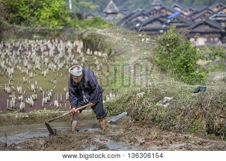 Zhaoxing Dong Village Guizhou Province China - April 8 2010: Arable land the Chinese a tiller cultivates ground on flooded rice paddy with water using a hand a mattock spring morning.