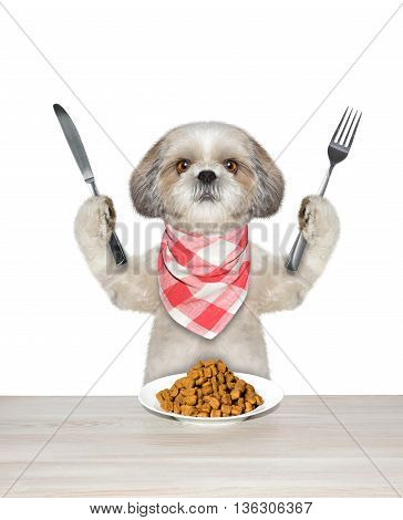dog going to eat and hold knife and fork -- isolated on white